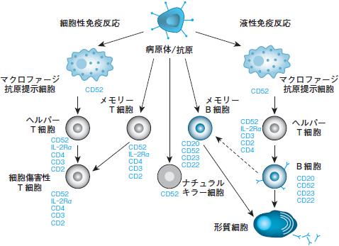血管 免疫 芽 球 性 t 細胞 リンパ腫
